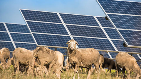 CAN SOLAR AGRICULTURE SAVE THE MODERN FARMING INDUSTRY?